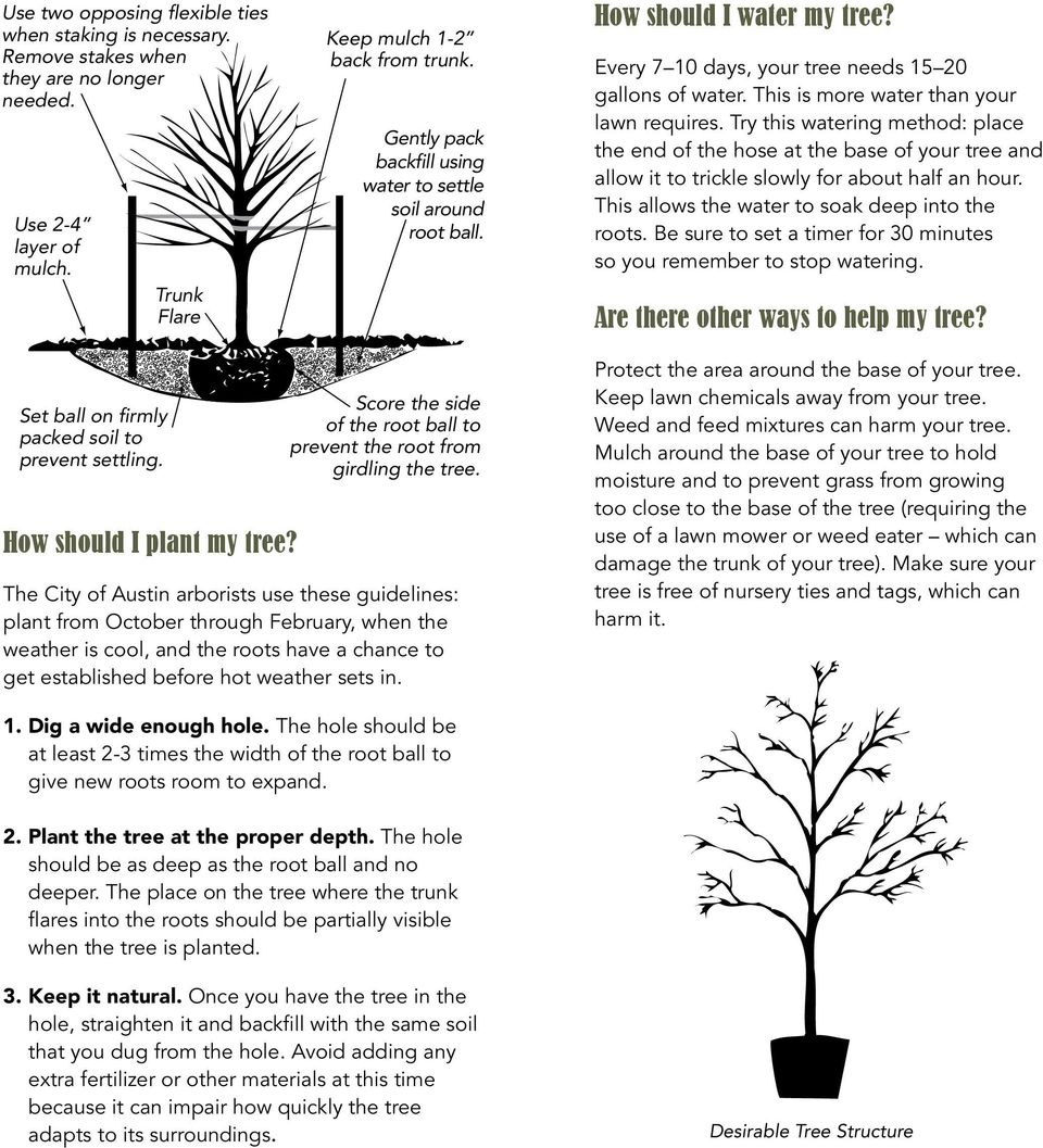 Try this watering method: place the end of the hose at the base of your tree and allow it to trickle slowly for about half an hour. This allows the water to soak deep into the roots.
