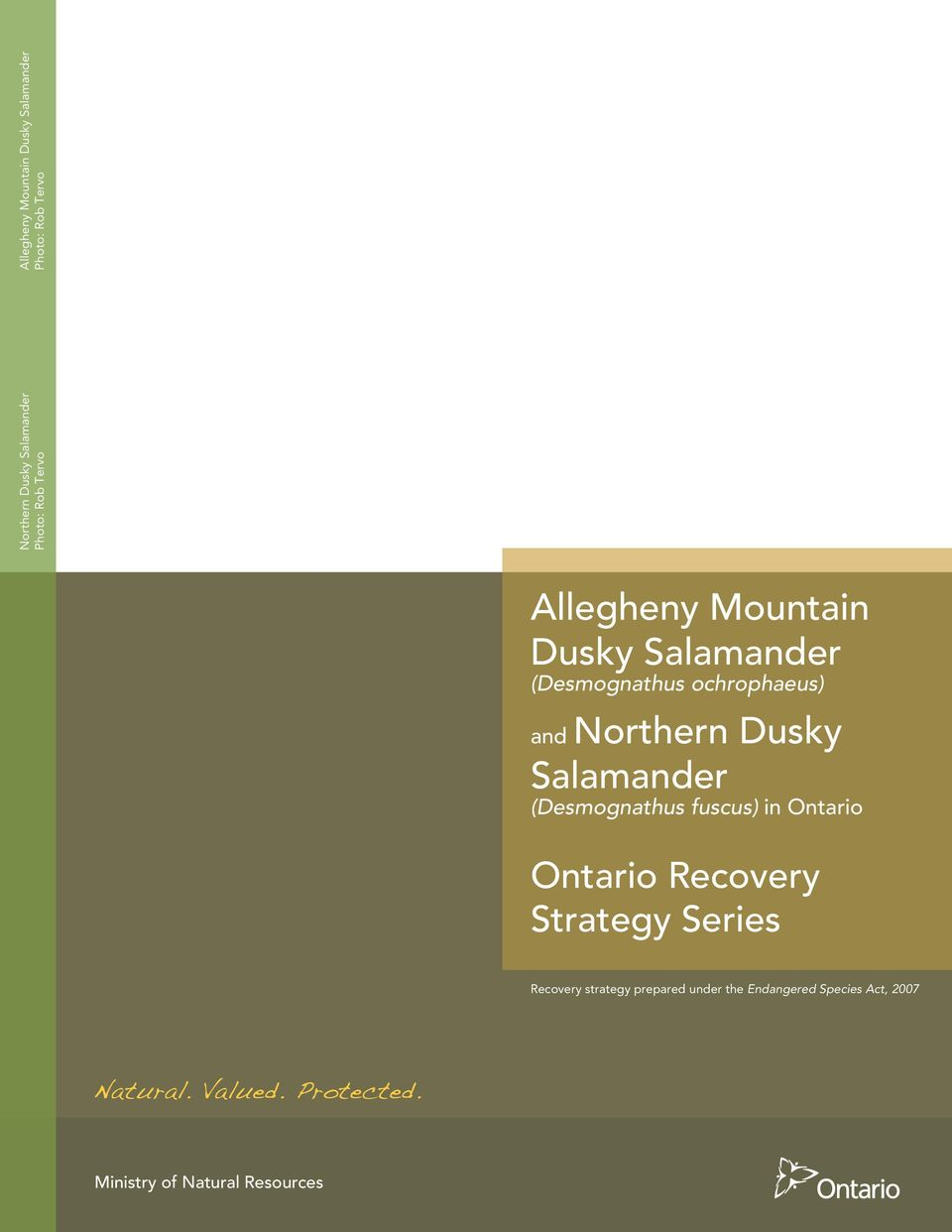 Northern Dusky Salamander (Desmognathus fuscus) Ontario Recovery Strategy Series