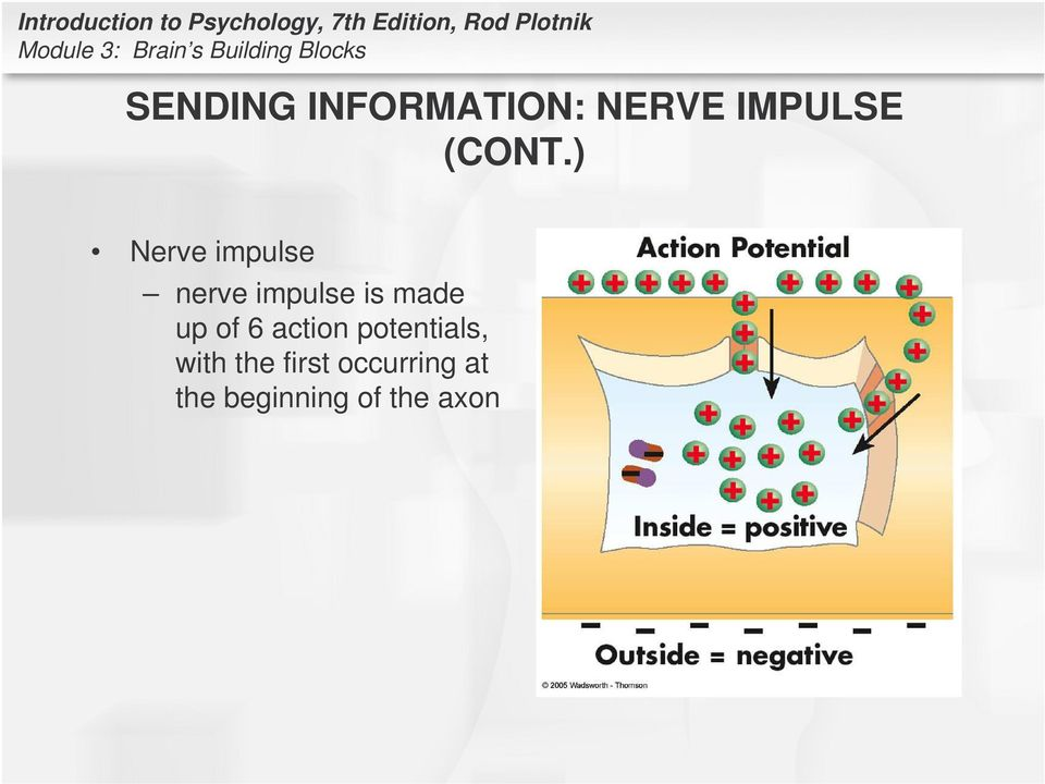 ) Nerve impulse nerve impulse is made