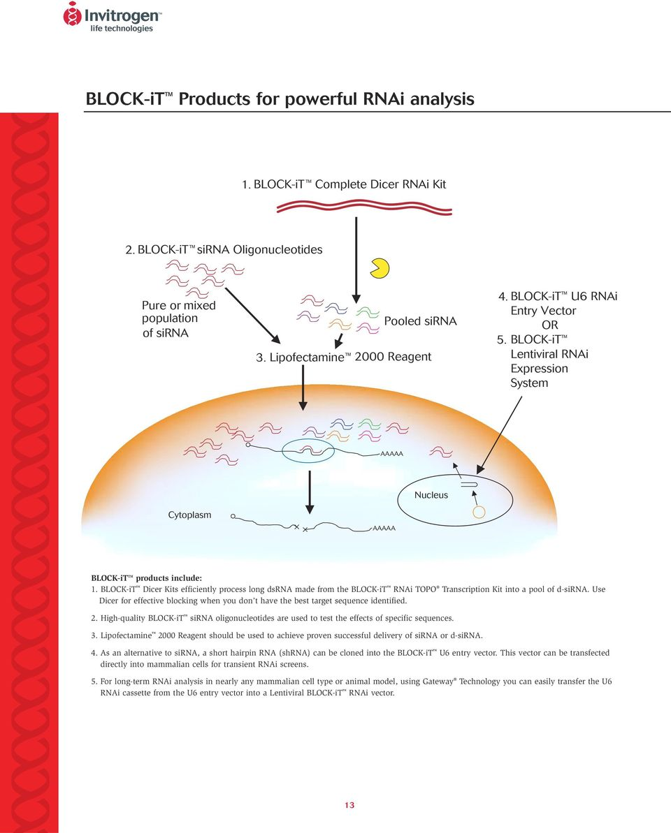 BLOCK-iT Dicer Kits efficiently process long dsrna made from the BLOCK-iT RNAi TOPO Transcription Kit into a pool of d-sirna.