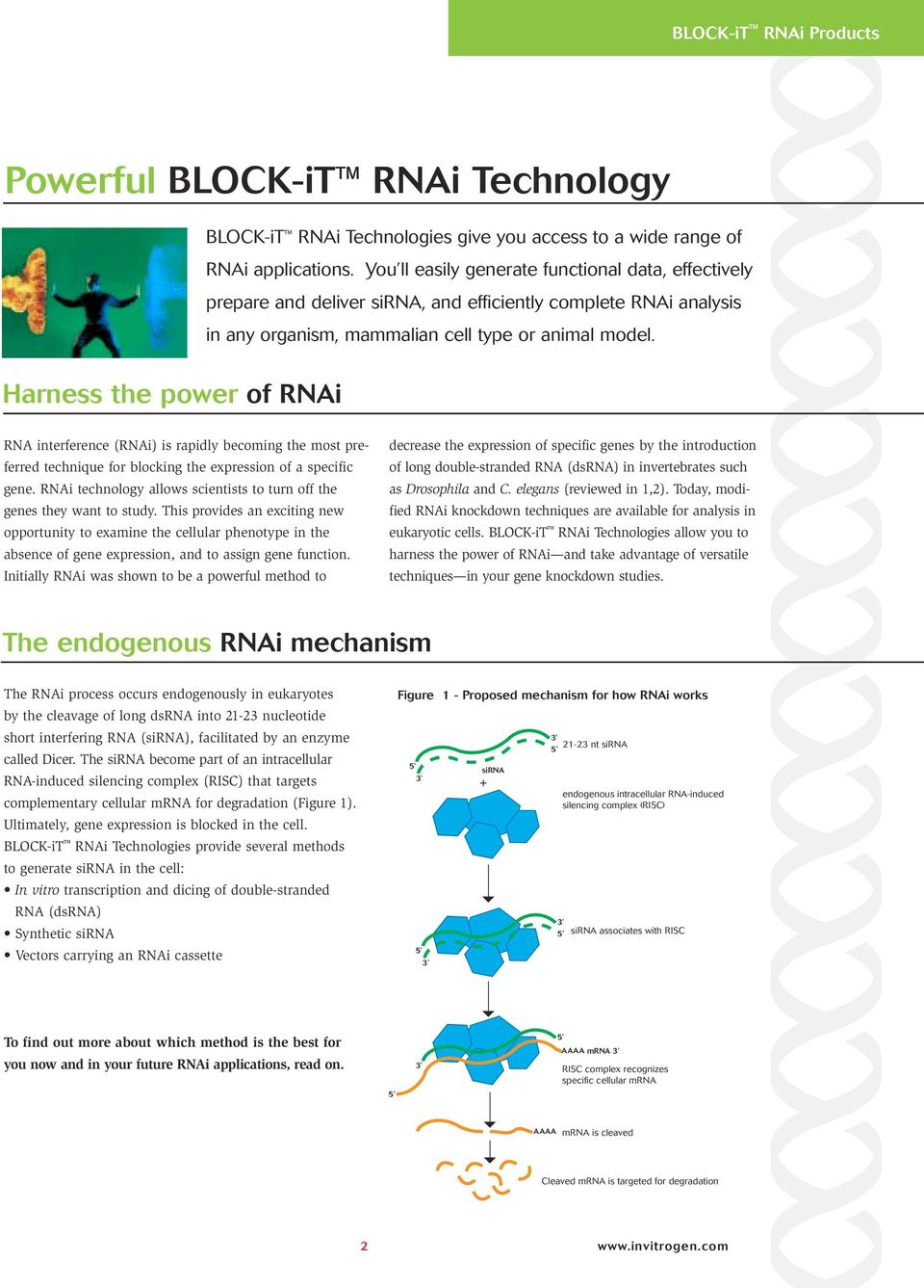 RNA interference (RNAi) is rapidly becoming the most preferred technique for blocking the expression of a specific gene. RNAi technology allows scientists to turn off the genes they want to study.