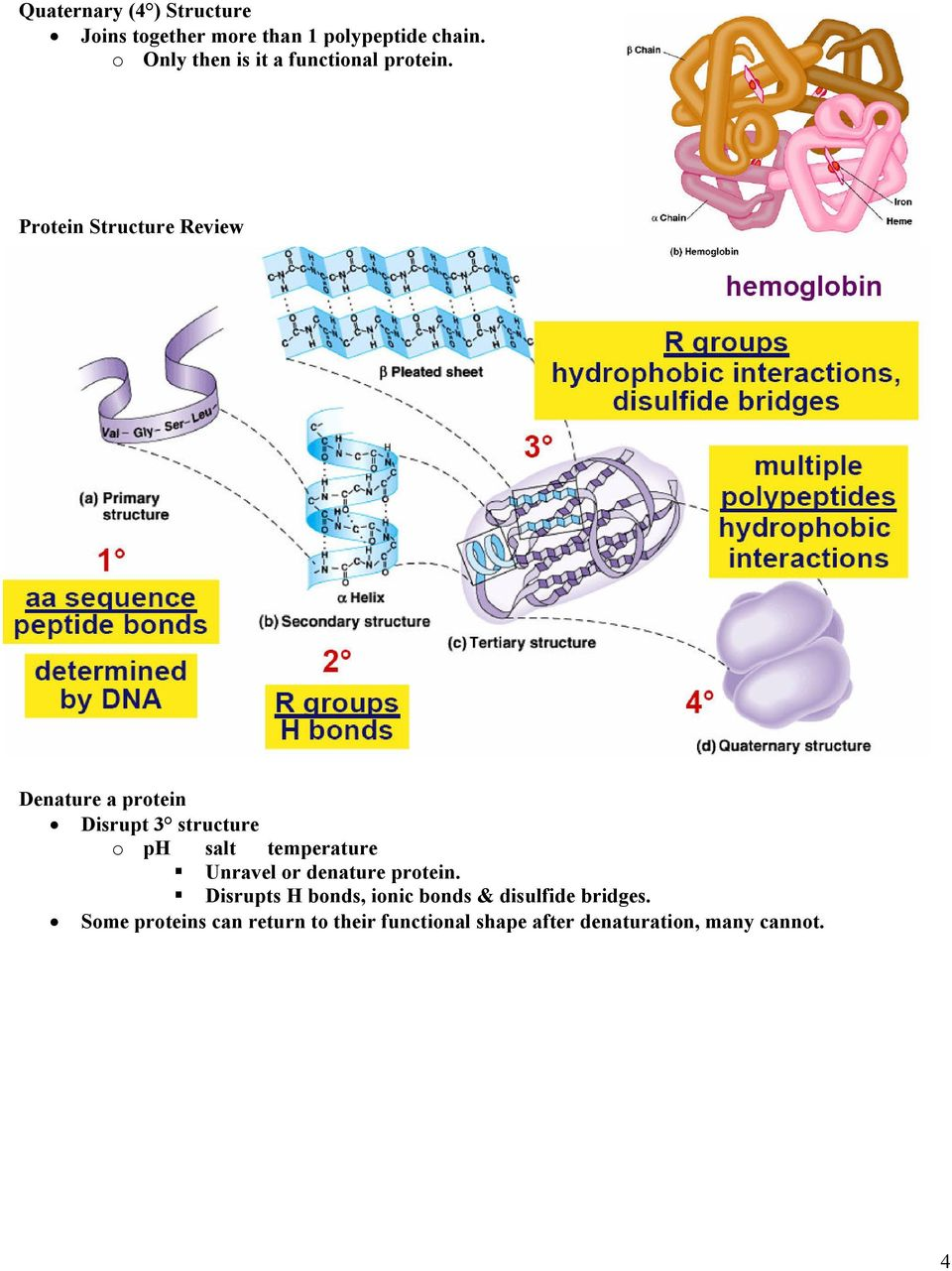 Protein Structure Review Denature a protein Disrupt 3 structure o ph salt temperature