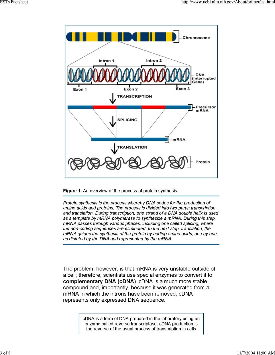 During this step, mrna passes through various phases, including one called splicing, where the non-coding sequences are eliminated.