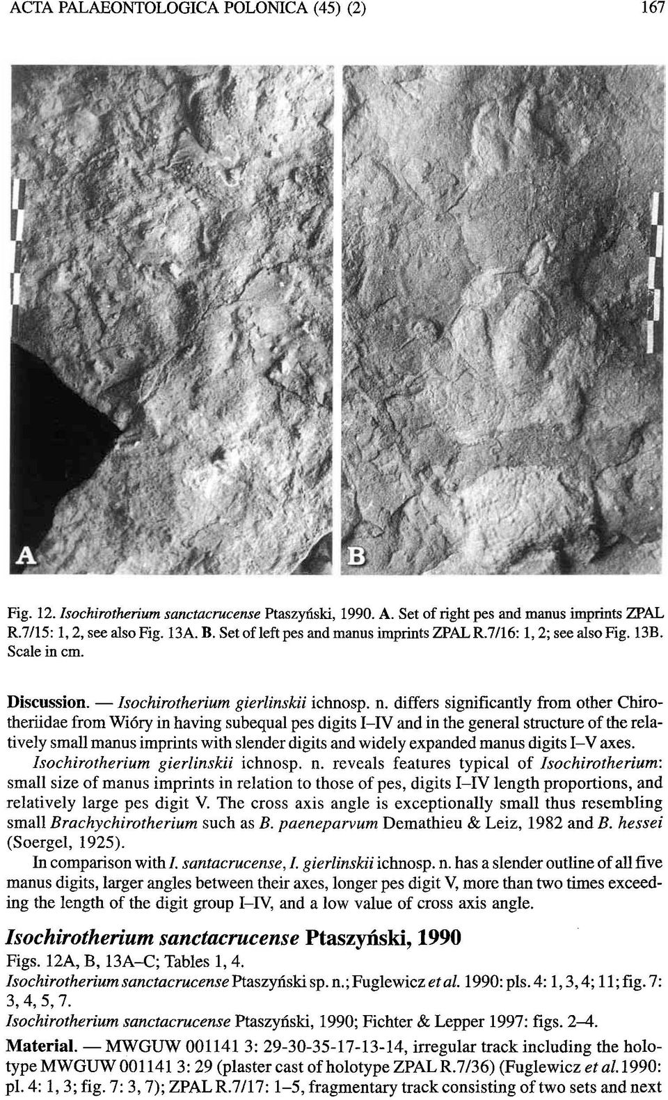 differs significantly from other Chirotheriidae from Wi6ry in having subequal pes digits I-IV and in the general structure of the relatively small manus imprints with slender digits and widely