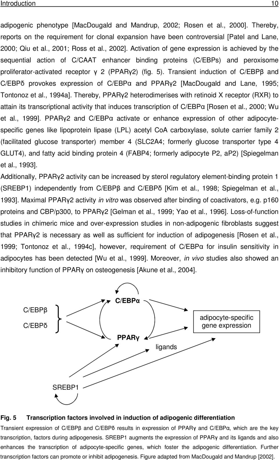 Activation of gene expression is achieved by the sequential action of C/CAAT enhancer binding proteins (C/EBPs) and peroxisome proliferator-activated receptor γ 2 (PPARγ2) (fig. 5).