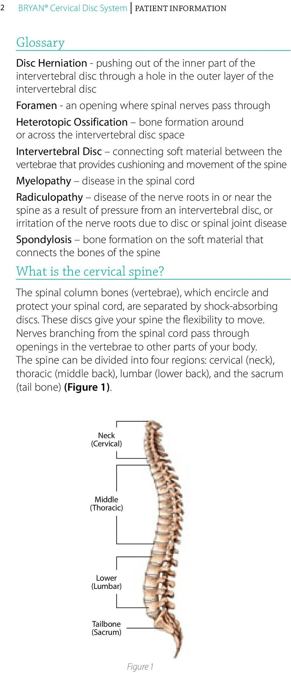vertebrae that provides cushioning and movement of the spine Myelopathy disease in the spinal cord Radiculopathy disease of the nerve roots in or near the spine as a result of pressure from an