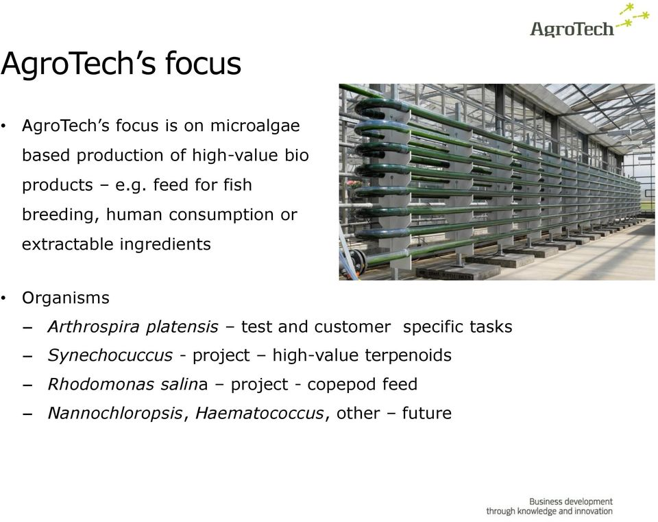 feed for fish breeding, human consumption or extractable ingredients Organisms Arthrospira