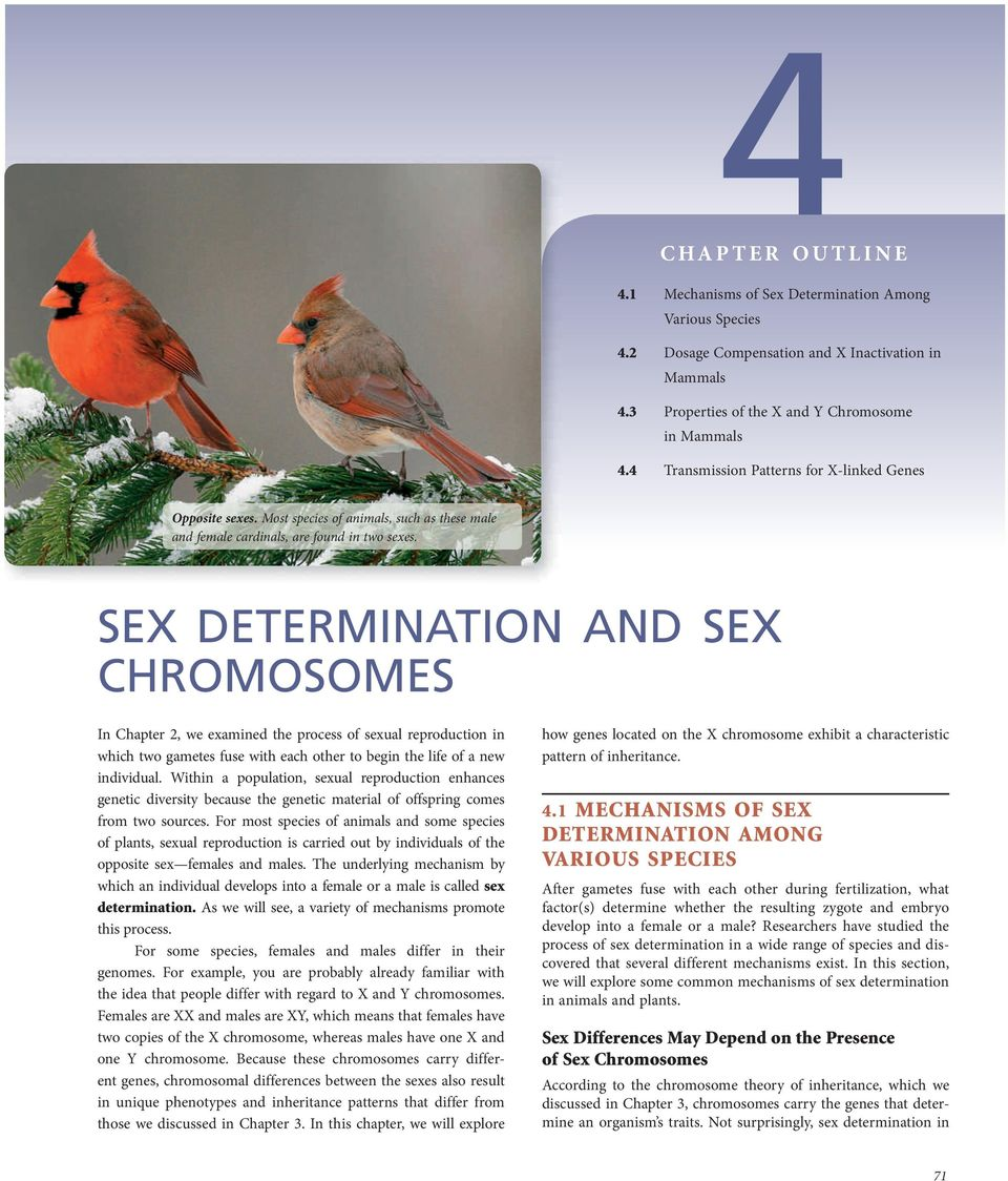 SEX DETERMINATION AND SEX CHROMOSOMES In Chapter 2, we examined the process of sexual reproduction in which two gametes fuse with each other to egin the life of a new individual.