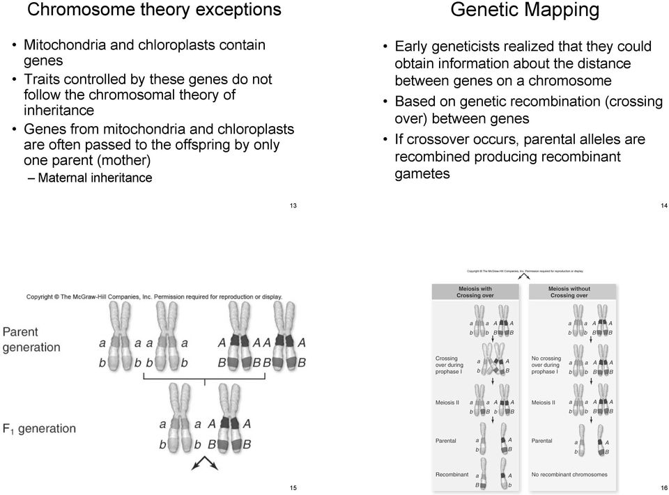 inheritance Genetic Mapping Early geneticists realized that they could obtain information about the distance between genes on a chromosome
