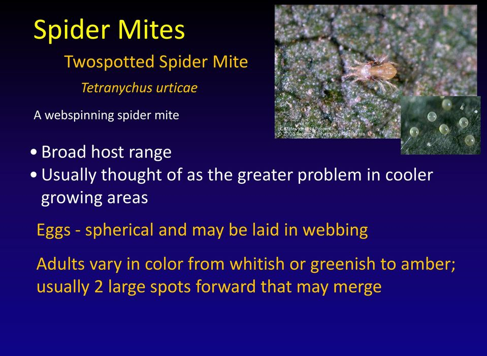 growing areas Eggs - spherical and may be laid in webbing Adults vary in