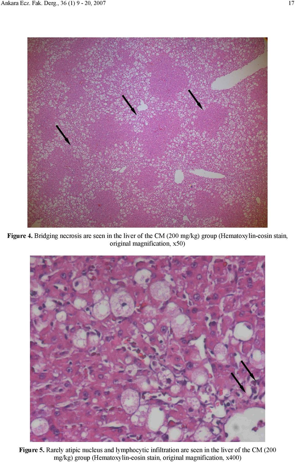 (Hematoxylin-eosin stain, original magnification, x50) Figure 5.