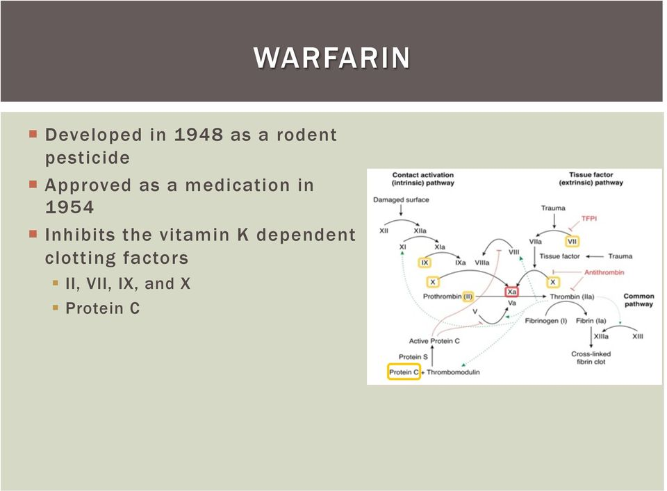 1954 Inhibits the vitamin K dependent
