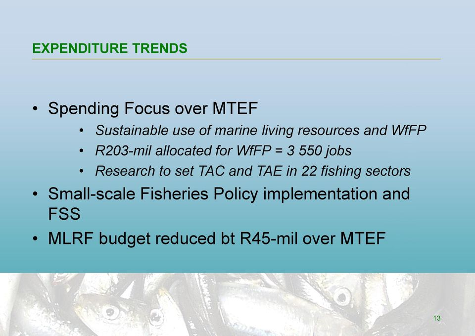 Research to set TAC and TAE in 22 fishing sectors Small-scale