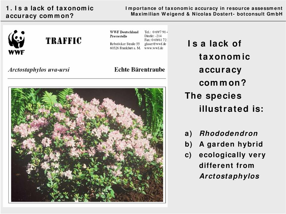The species illustrated is: a) Rhododendron b) A