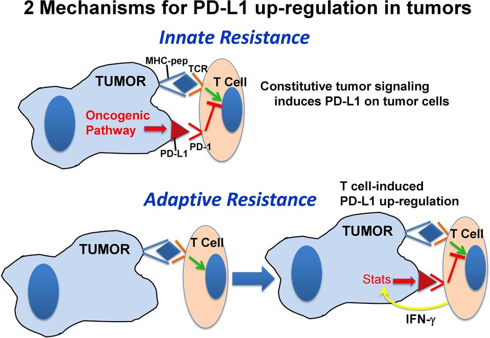 tumor signaling induces PD-L1 on tumor cells Adaptive Resistance T