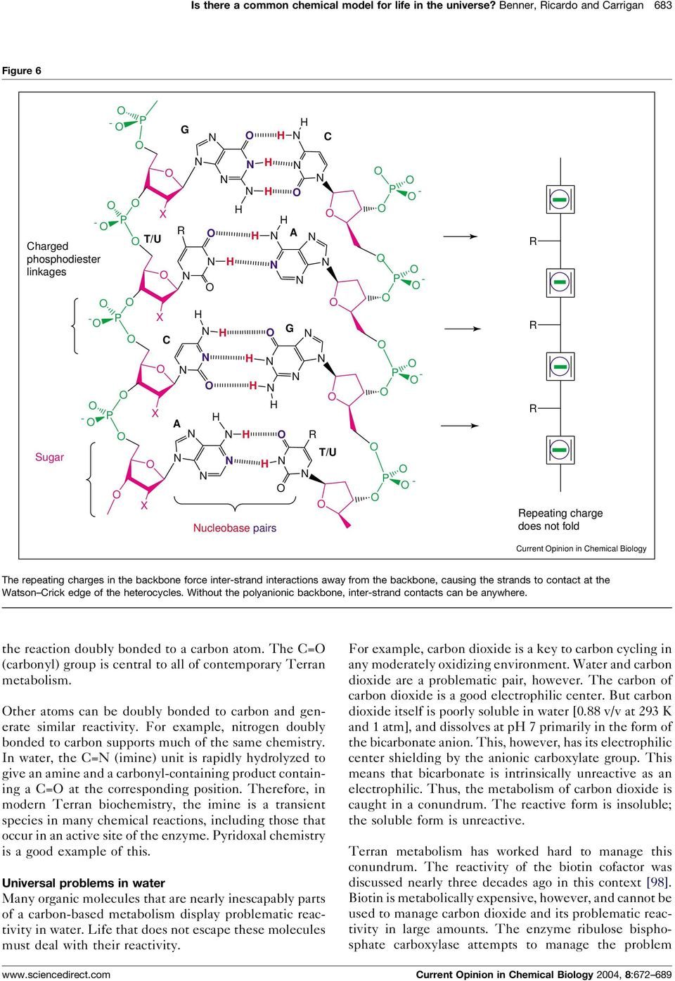 hemical Biology The repeating charges in the backbone force inter-strand interactions away from the backbone, causing the strands to contact at the Watson rick edge of the heterocycles.