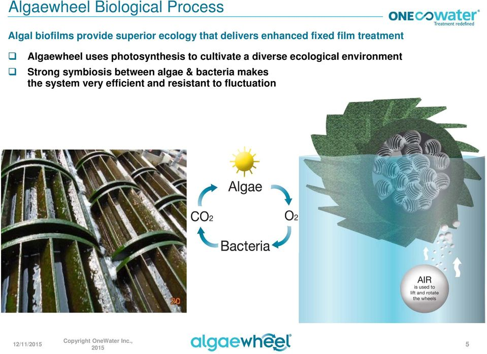 cultivate a diverse ecological environment Strong symbiosis between algae &