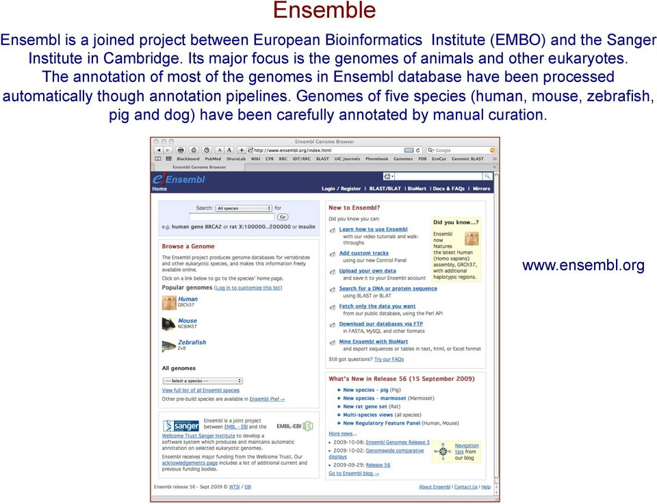 The annotation of most of the genomes in Ensembl database have been processed automatically though annotation