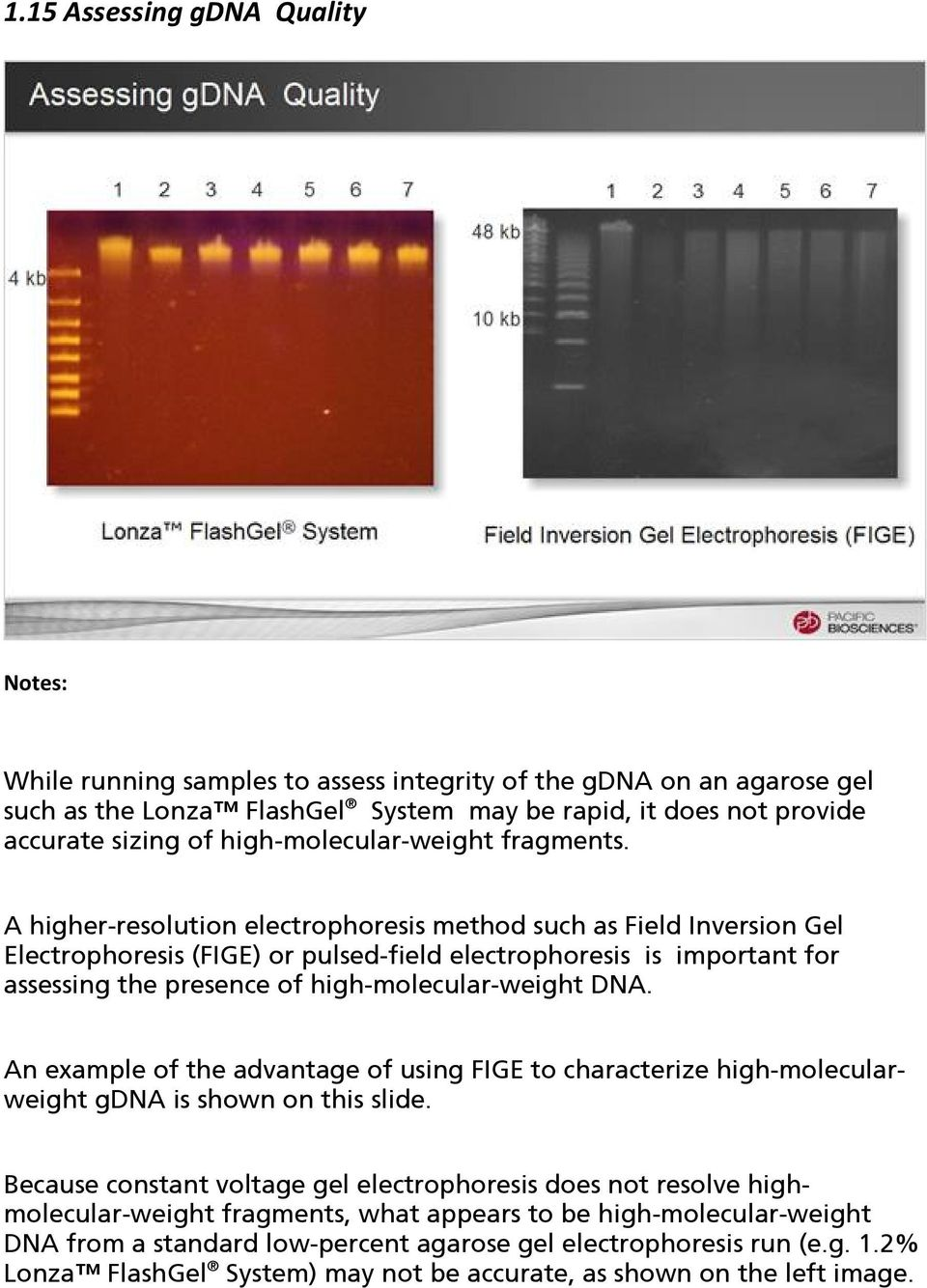 A higher-resolution electrophoresis method such as Field Inversion Gel Electrophoresis (FIGE) or pulsed-field electrophoresis is important for assessing the presence of high-molecular-weight DNA.