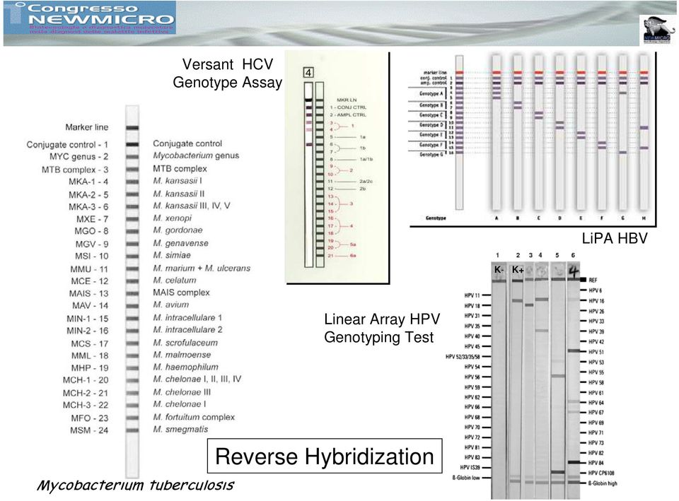 HPV Genotyping Test