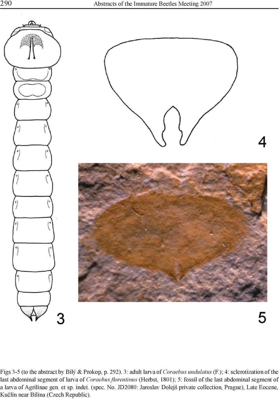 1801); 5: fossil of the last abdominal segment of a larva of Agrilinae gen. et sp. indet. (spec.