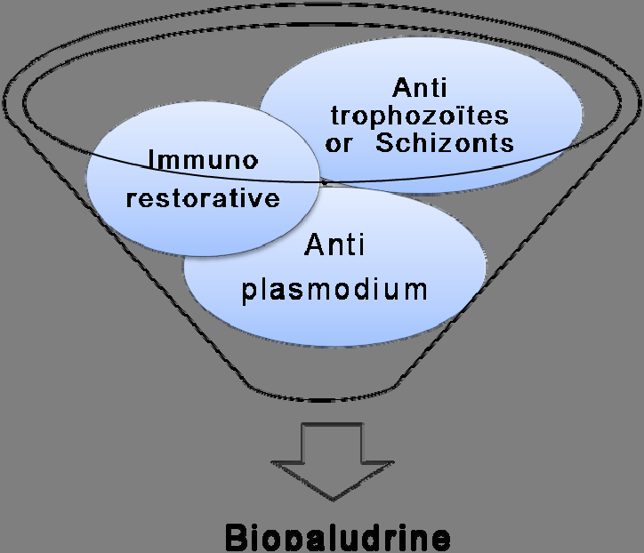 Figure 17. Composition of Biopaludrine with four plants: immunorestorative extract, and three anti-malaria plants (anti-plasmodium, anti-trophozoïdes, anti-schizonts).