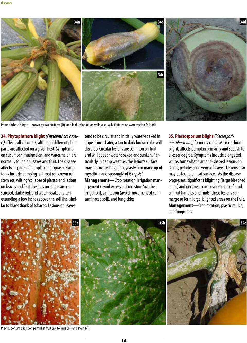 Symptoms include damping-off, root rot, crown rot, stem rot, wilting/collapse of plants, and lesions on leaves and fruit.