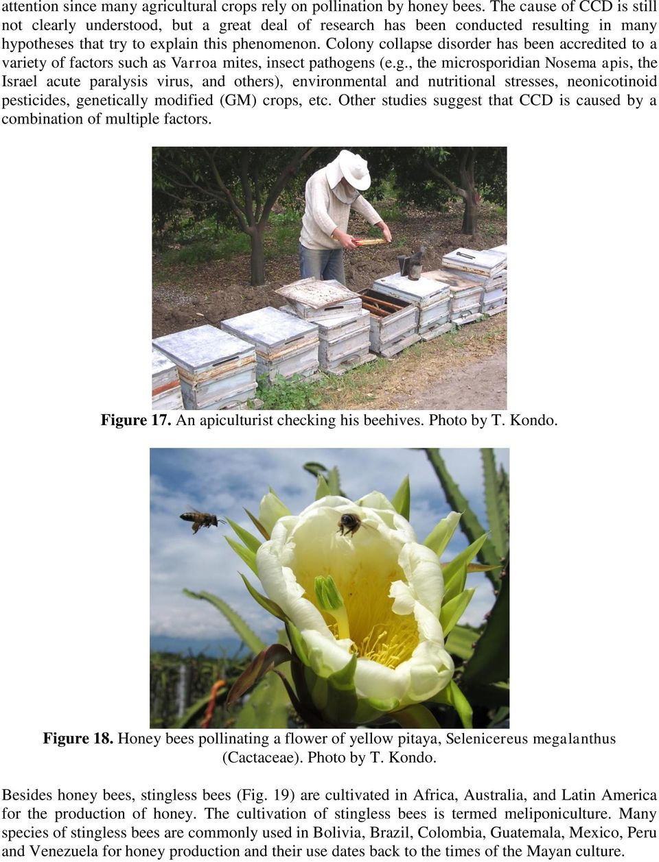 Colony collapse disorder has been accredited to a variety of factors such as Varroa mites, insect pathoge