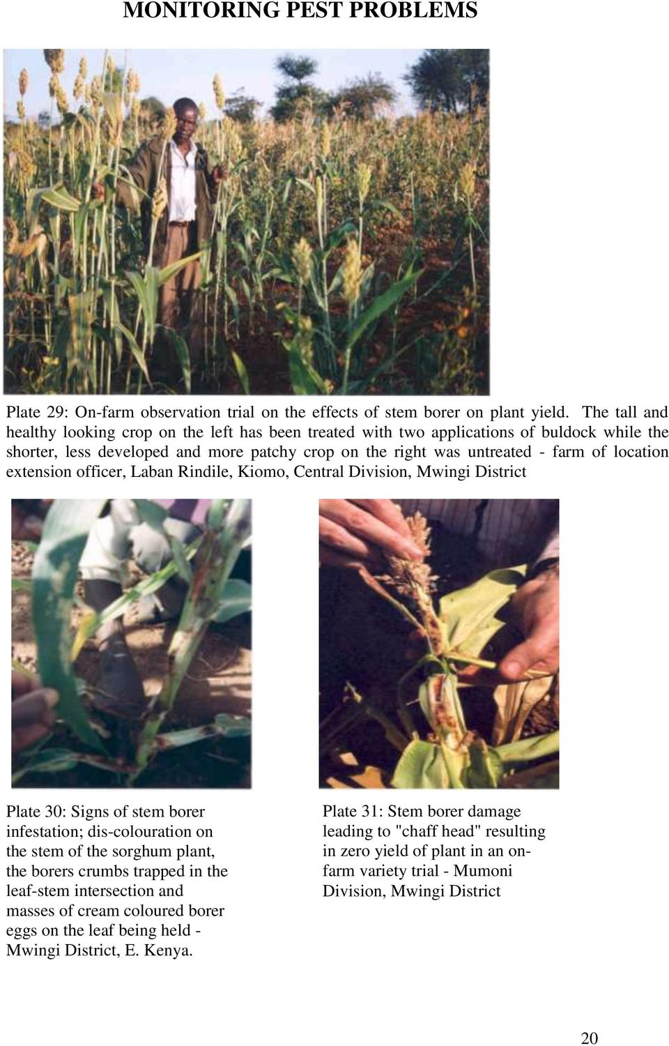 location extension officer, Laban Rindile, Kiomo, Central Division, Mwingi District Plate 30: Signs of stem borer infestation; dis-colouration on the stem of the sorghum plant, the borers