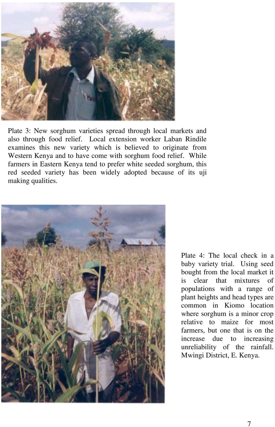 While farmers in Eastern Kenya tend to prefer white seeded sorghum, this red seeded variety has been widely adopted because of its uji making qualities.