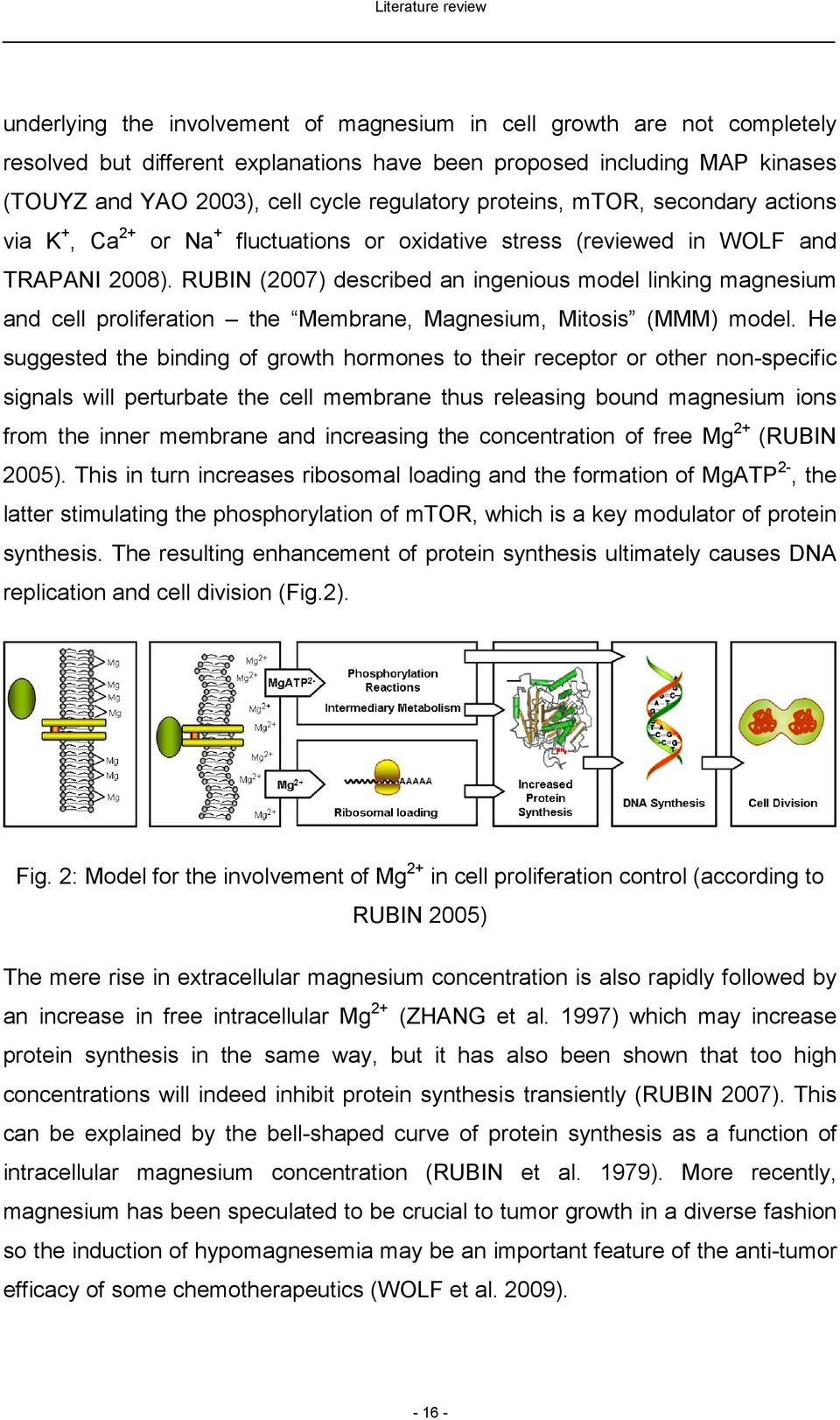 RUBIN (2007) described an ingenious model linking magnesium and cell proliferation the Membrane, Magnesium, Mitosis (MMM) model.