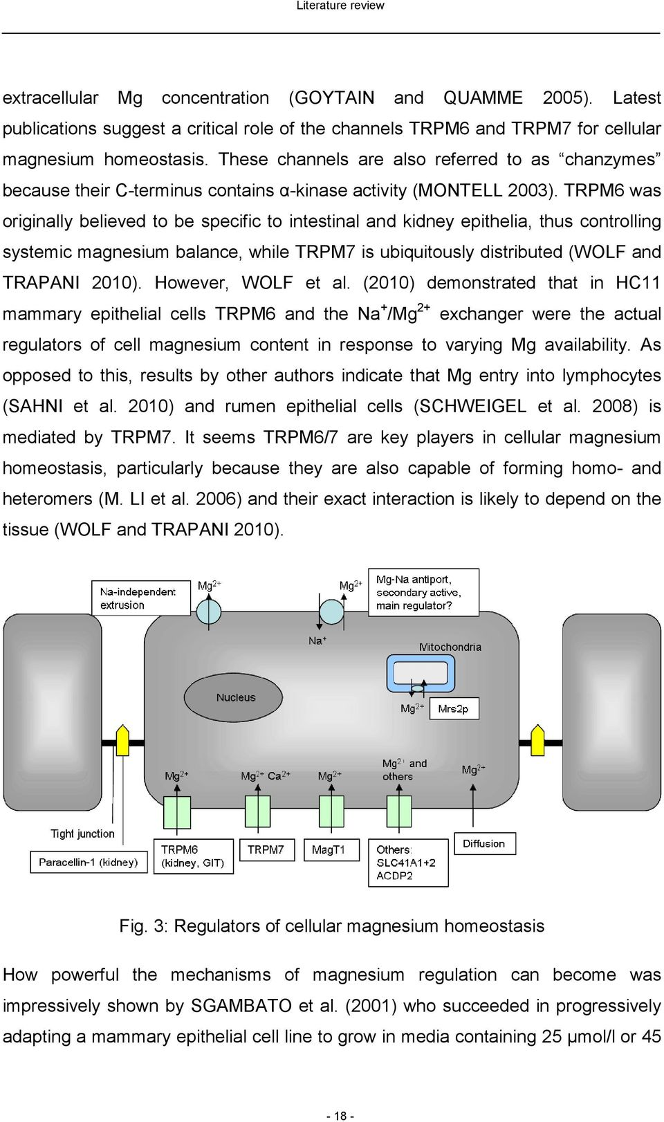 TRPM6 was originally believed to be specific to intestinal and kidney epithelia, thus controlling systemic magnesium balance, while TRPM7 is ubiquitously distributed (WOLF and TRAPANI 2010).