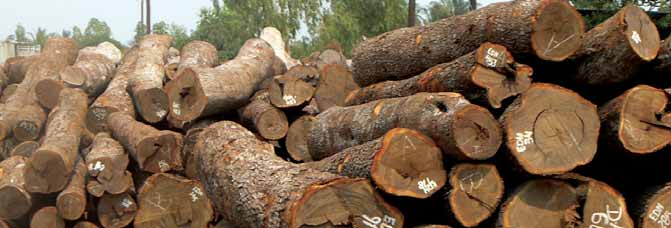 Chinese timber imports from Mozambique exceeded licensed legal harvests by 154,030 cubic metres in 2012 ILLEGAL LOGGING IN MOZAMBIQUE As Sino-Mozambican timber trade volumes have grown, it has become