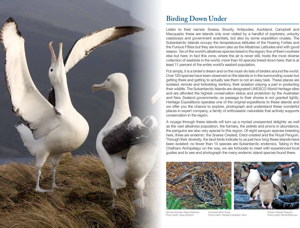 The Subantarctic Islands occupy the tempestuous latitudes of the Roaring Forties and the Furious Fifties but they are known also as the Albatross Latitudes and with good reason.