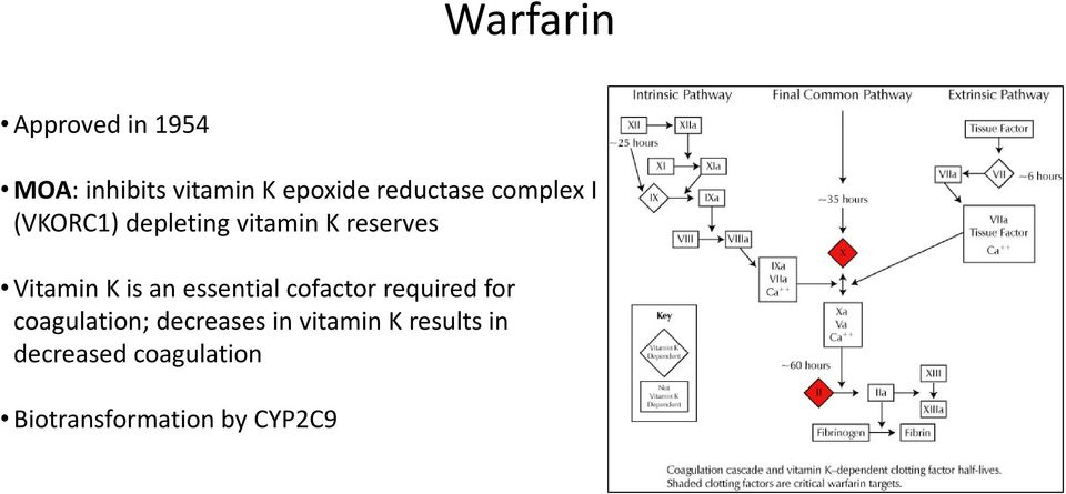 Vitamin K is an essential cofactor required for coagulation;