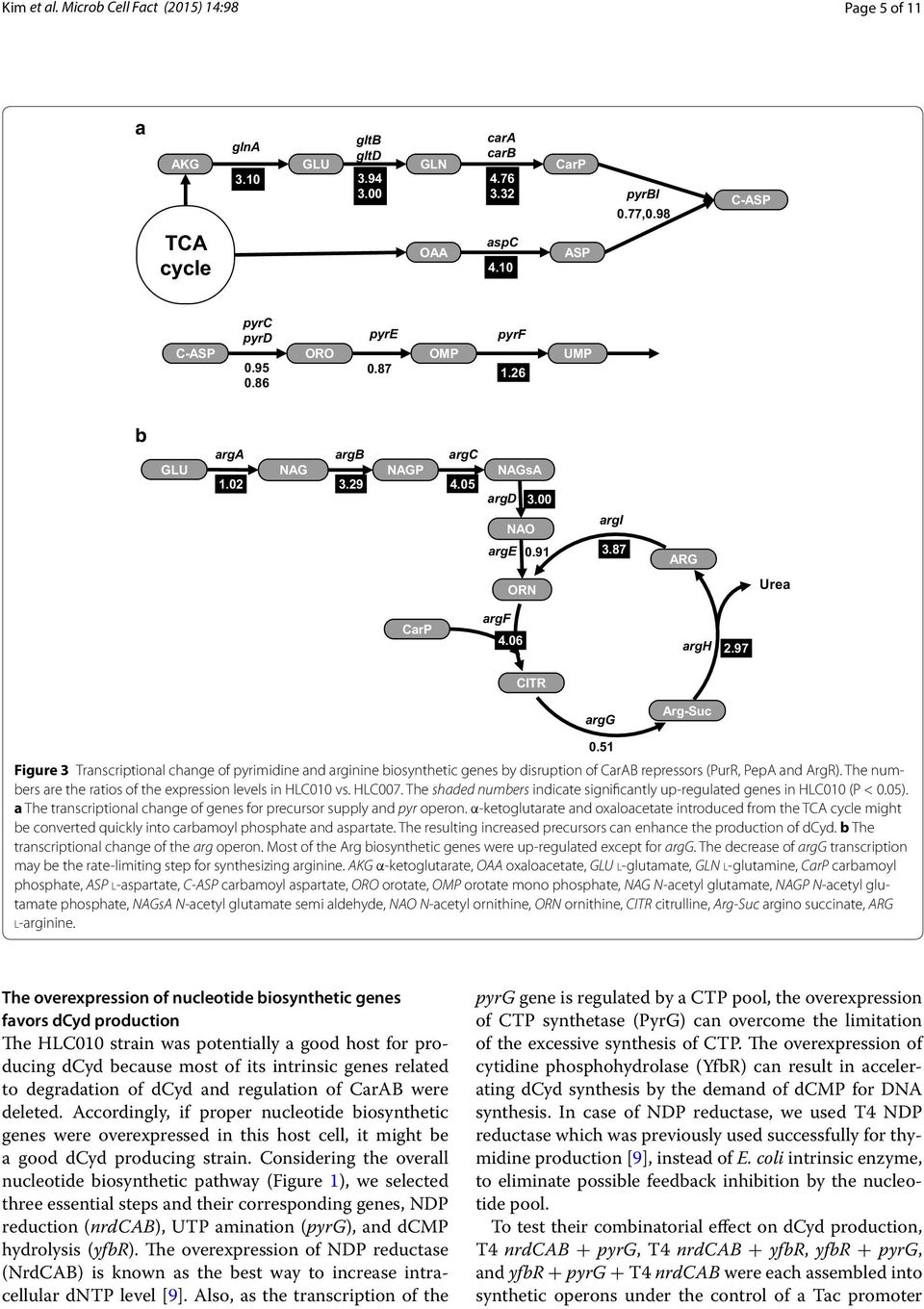 51 Figure 3 Transcriptional change of pyrimidine and arginine biosynthetic genes by disruption of CarAB repressors (PurR, PepA and ArgR).