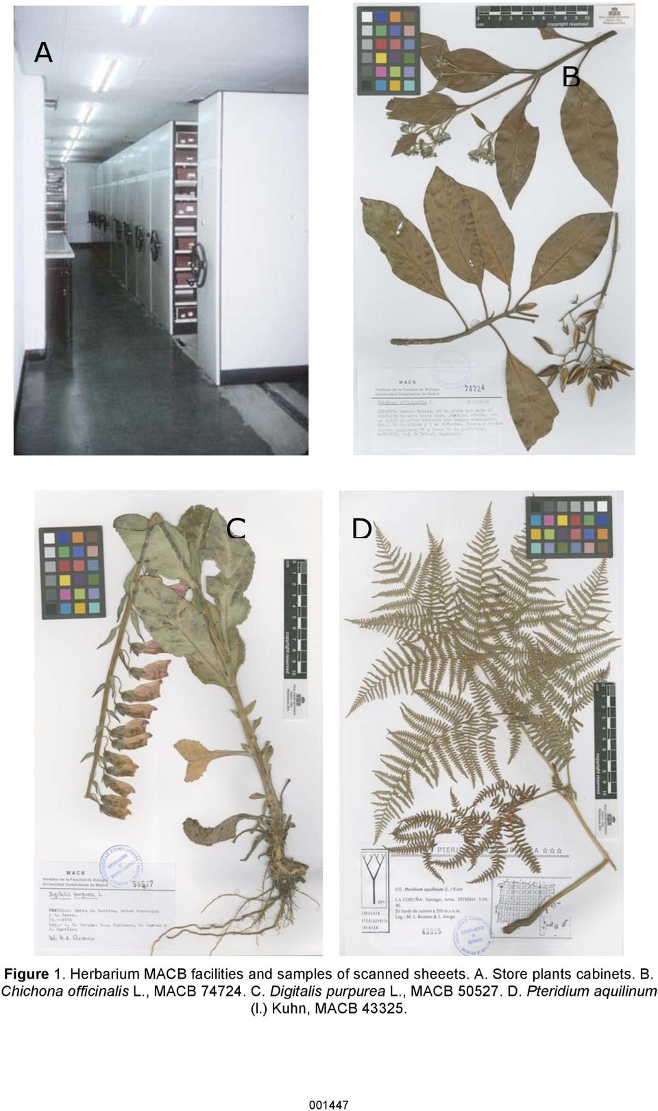 A. Store plants cabinets. B. Chichona officinalis L.