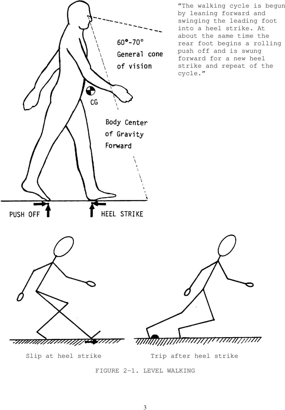 At about the same time the rear foot begins a rolling push off and is