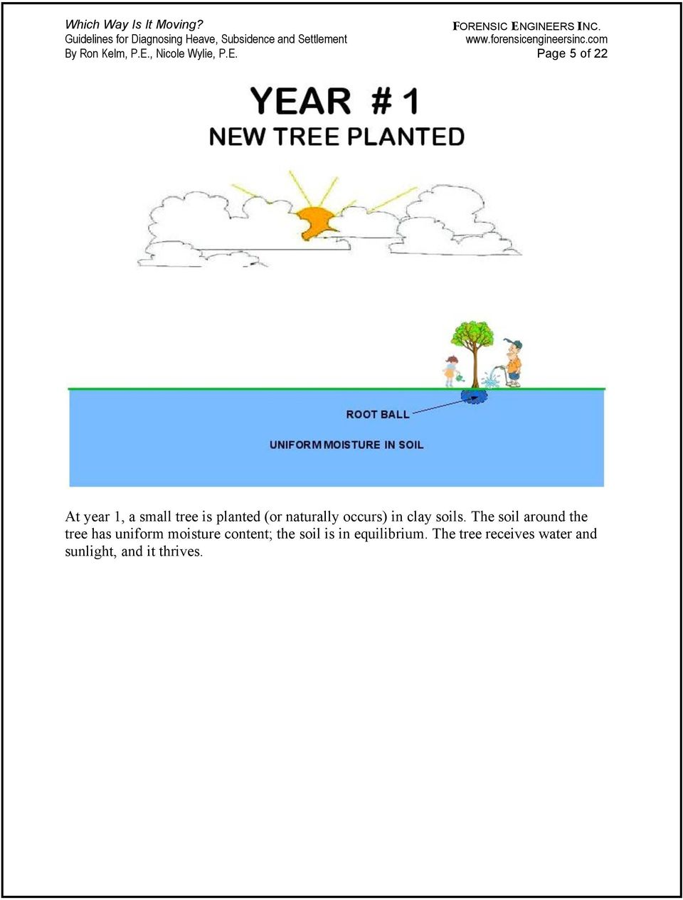 Page 5 of 22 At year 1, a small tree is planted (or naturally