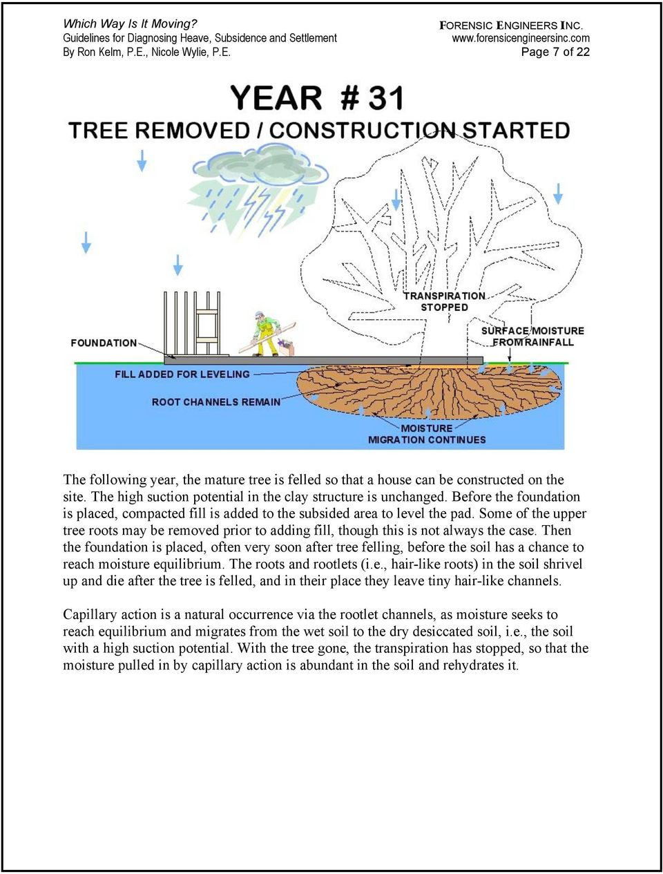 Some of the upper tree roots may be removed prior to adding fill, though this is not always the case.