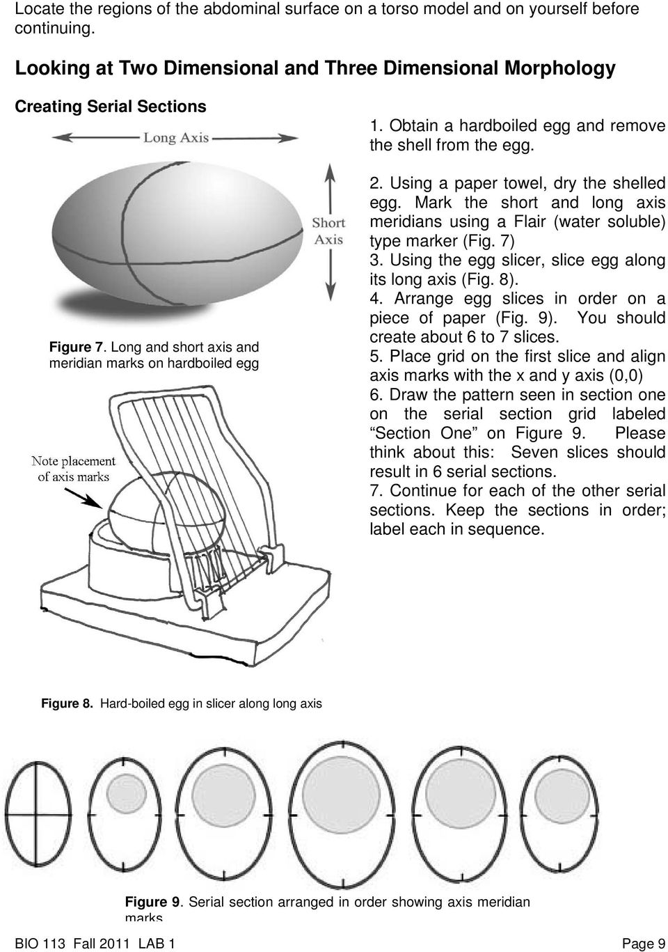 Mark the short and long axis meridians using a Flair (water soluble) type marker (Fig. 7) 3. Using the egg slicer, slice egg along its long axis (Fig. 8). 4.
