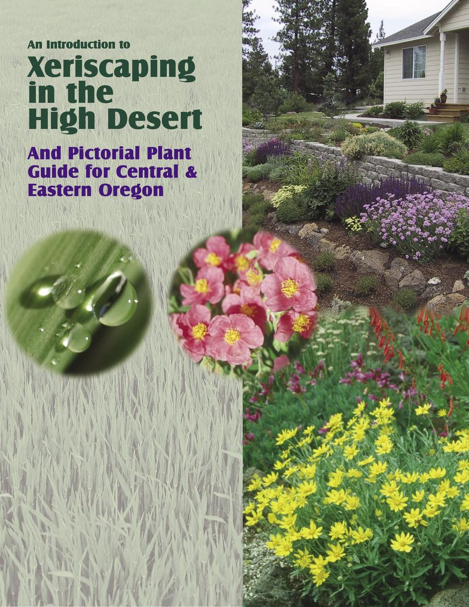 Desert And Pictorial