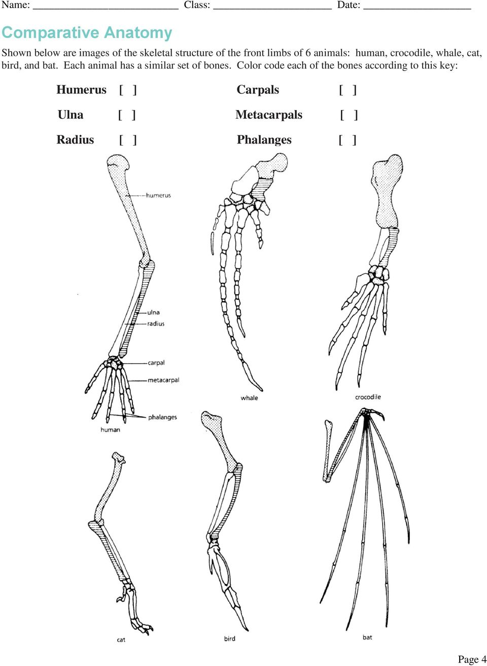 Each animal has a similar set of bones.