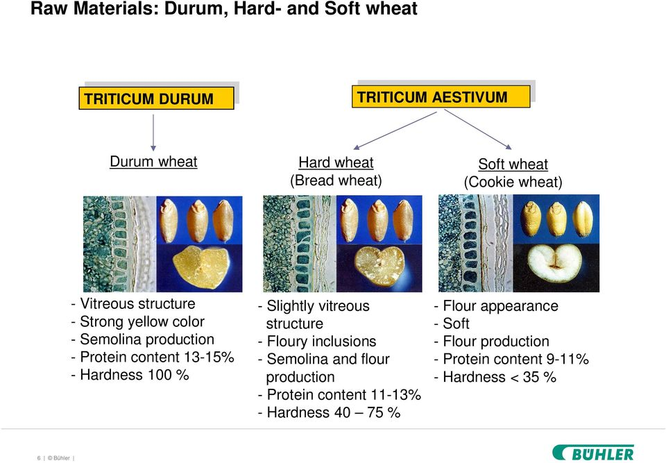 Protein content 13-15% - Hardness 100 % - Slightly vitreous structure - Floury inclusions - Semolina and flour production -