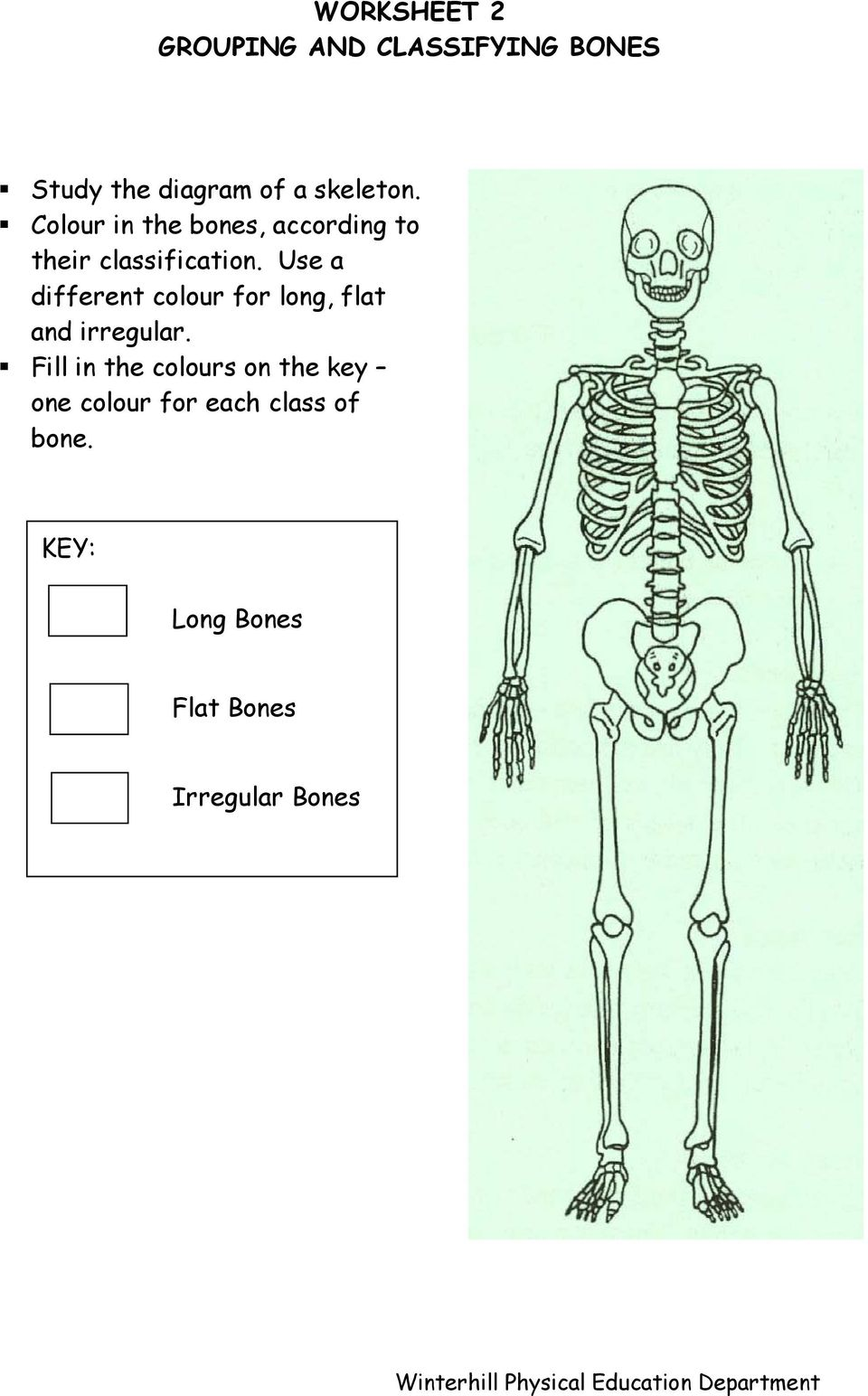 worksheet Joints Worksheet skeleton and joints g c s e physical education unit 1 factors use a different colour for long flat irregular