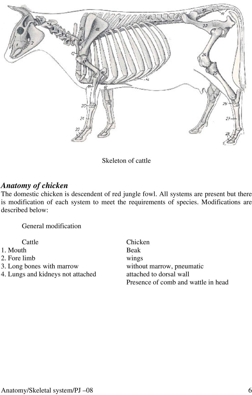 Modifications are described below: General modification Cattle Chicken 1. Mouth Beak 2. Fore limb wings 3.