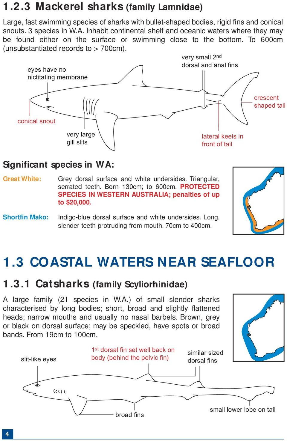 eyes have no nictitating membrane very small 2 nd dorsal and anal fins conical snout crescent shaped tail very large gill slits lateral keels in front of tail Significant species in WA: Great White: