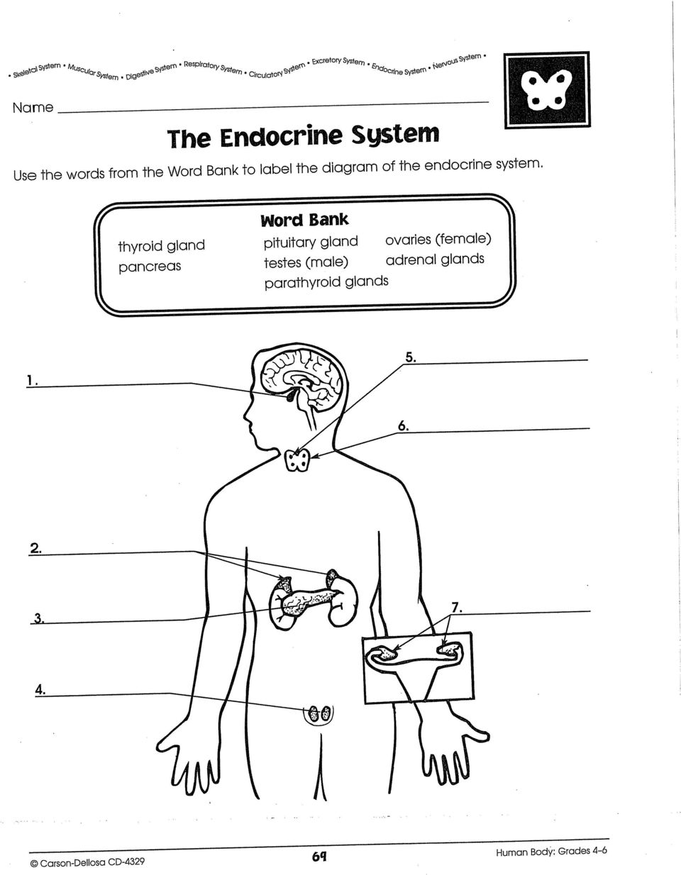 Fantastisch Anatomy And Physiology Coloring Workbook Endocrine ...