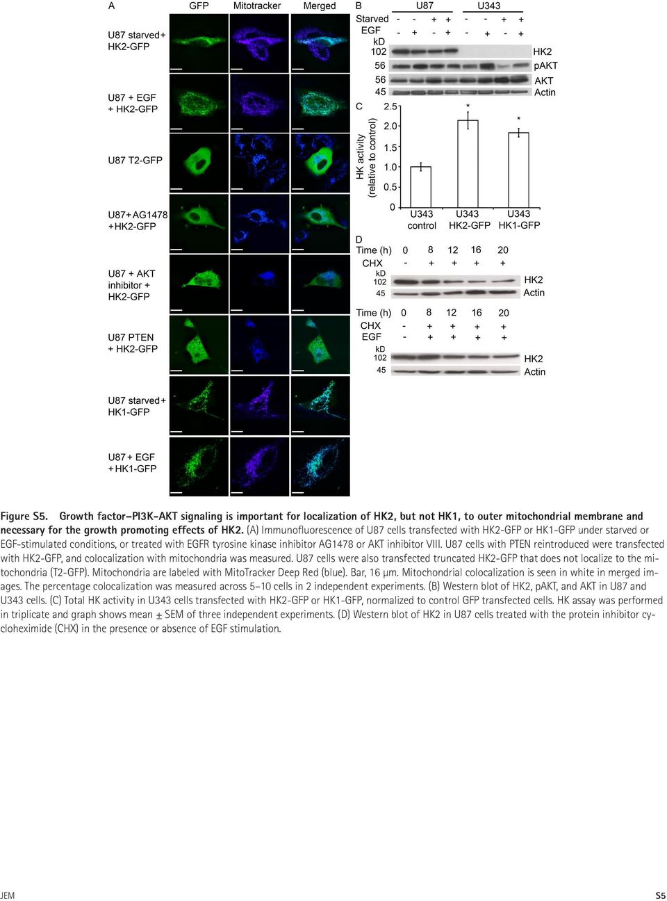 U87 cells with PTEN reintroduced were transfected with HK2-GFP, and colocalization with mitochondria was measured.