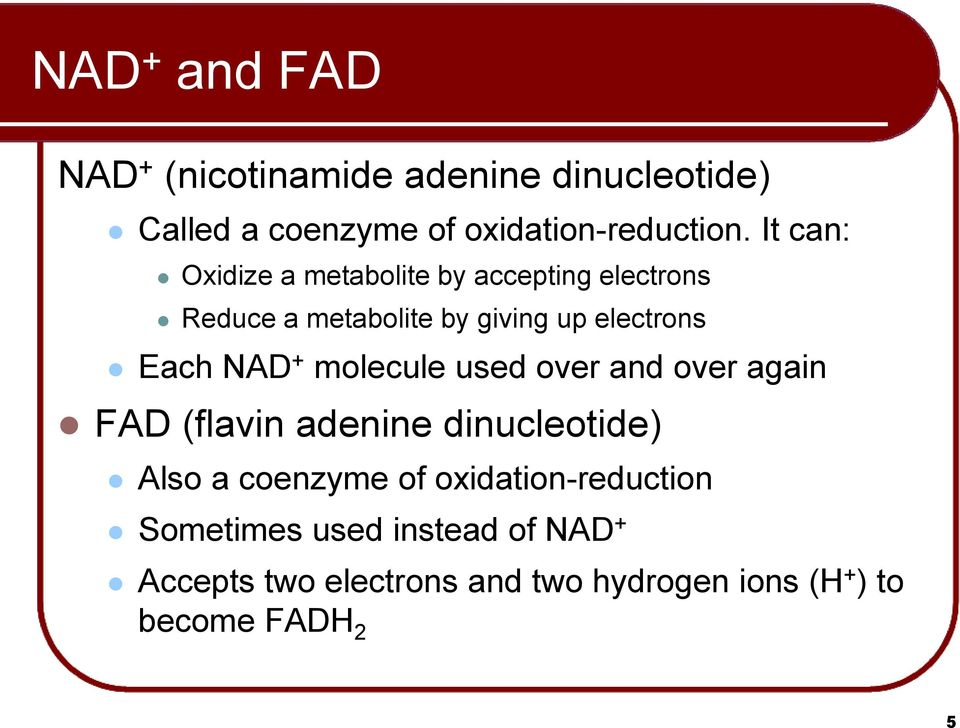 NAD + molecule used over and over again FAD (flavin adenine dinucleotide) Also a coenzyme of
